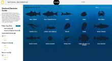 what fish to eat paleo diet